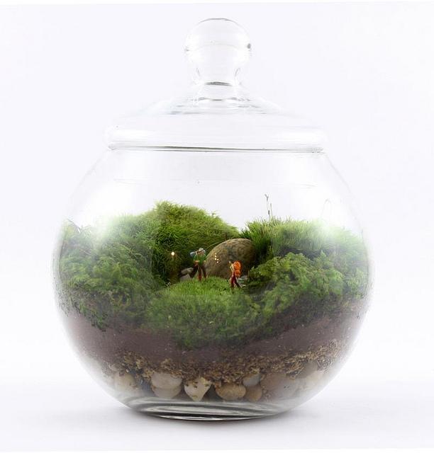 Twig-terrarium